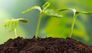土壤污染状况调查及修复